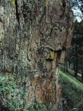 Close-Up Petrified Tree Photographic Print by Jeff Foott