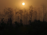 Florida, Raiford, Day Breaks across a Field of Recently Harvest Slash Pines Photographic Print by Jon M. Fletcher