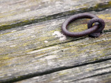 A Metal Ring in a Wooden Dock Photographic Print