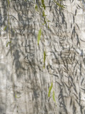 China, Beijing, Willow Tree Branches with Ancient Wall in Summer Palace Photographic Print by Keren Su