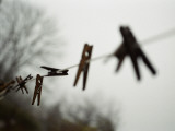 Clothes Pins on a Clothes Line Photographic Print