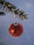 A Christmas Bauble on a Fir Tree Stampa fotografica