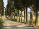View of Countryside Near in Siena, Italy Photographic Print