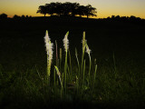 Lit Up Plants at Dusk Photographic Print by Lasse Pattersson