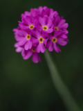 A Purple Flower Photographic Print