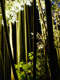 Arashiyama Bamboo Light Up Photographic Print by Lance Xiao