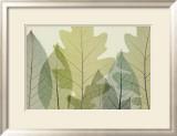 Six Leaves Prints by Steven N. Meyers