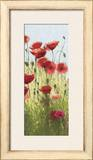 Mountain Poppies I Prints by Shirley Novak