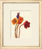 Tulipan II Prints by Shirley Novak