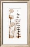 Eucalypti I Posters par Steven N. Meyers