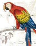 Parrot Botanique II Posters