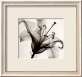 Lily Muscadet Prints by Steven N. Meyers