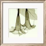 Stechapfel Kunst von Steven N. Meyers