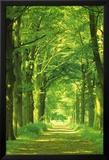 Waldweg Kunstdrucke von Hein Van Den Heuvel