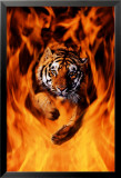 Tigre du Bengale sautant dans les flammes Affiches