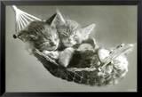 Kätzchen in der Hängematte Kunstdruck von Keith Kimberlin
