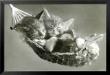 Kittens In A Hammock Posters by Keith Kimberlin