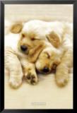 Snooze Prints by Keith Kimberlin