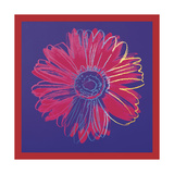 Daisy, c.1982 (Blue and Red) Giclee Print by Andy Warhol