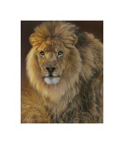 Power and Presence: African Lion Giclee Print by Joni Johnson-godsy