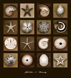 Armonía Pósters por John Kuss