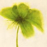Floral Burst V Print by Emma Forrester