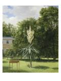 Un Yucca gloriosa dans le parc de Neuilly Giclee Print by Antoine Chazal