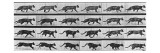 Album sur la décomposition du mouvement: Animal Locomotion: chat Giclee Print by Eadweard Muybridge