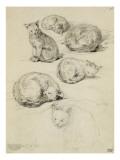 Album factice : Etudes de six chats Reproduction procédé giclée par Augustin De Saint-aubin