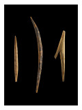 A Small Point, a Small Peak Curve (Hook) and a Spear Giclee Print