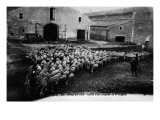 &quot;Aveyron.394.Roquefort, Leaving a Flock of Sheep &quot; Giclee Print