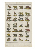 Planche animali&#232;re Giclee Print