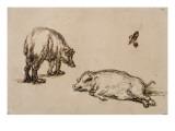 Un verrat debout, une truie couchée et étude d'un oeil et d'une oreille Giclee Print by  Rembrandt van Rijn