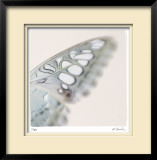 Butterfly Study 8 Limited Edition Framed Print by Claude Peschel Dutombe
