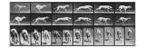 Album sur la décomposition du mouvement, Animal Locomotion: chien Giclee Print by Eadweard Muybridge