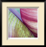 Banana Leaves II Limited Edition Framed Print by Joy Doherty
