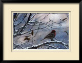 Winter is Upon Us Limited Edition Framed Print by J. Vanderbrink