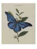 Album Donovan : an epitome of the natural history of insects in China Giclee Print by Edward Donovan