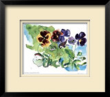 Spring Garden / Pansies Limited Edition Framed Print by Lynn Donoghue