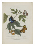 Album Donovan : an epitome of the natural history of insects in China Giclée-Druck von Edward Donovan