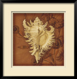 Conch Limited Edition Framed Print by Lisa Steinkamp