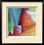Banana Leaves III Limited Edition Framed Print by Joy Doherty
