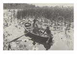 Gathering Water-Lilies (Collection of Water Lilies) Giclee Print by Peter Henry Emerson