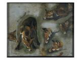 Renards Giclee Print by Pieter Boel