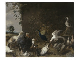 Oiseaux de Basse-Cour Gicl&#233;e-Druck von Utrecht Van