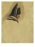 Tête d'homme coiffée d'un bicorne . Etude Giclée-Druck von Horace Vernet