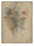Head of Bearded Man Seen Three-Quarters, Facing Right Gicle-tryk af Matteo Rosselli