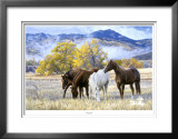 October Mist Limited Edition Framed Print by Tim Cox