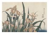 Iris et sauterelle Giclée-Druck von Katsushika Hokusai