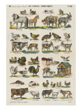 Les animaux domestiques Giclee Print
